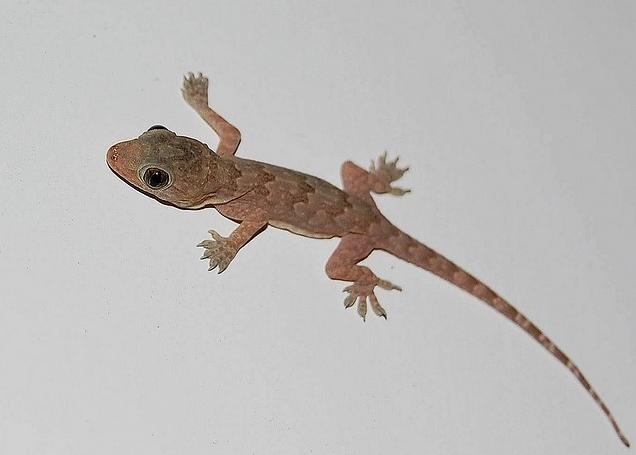 dazart-animals-facebook-profile-pictures